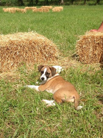 Agriturismo Bosco del Fracasso : Puppy sitting with me at the small hay bales