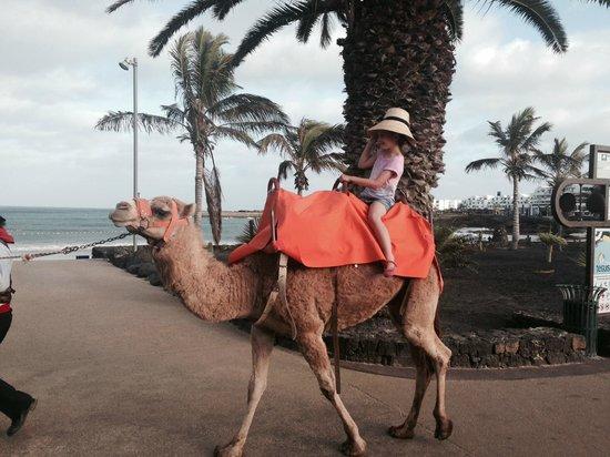 Peskera : Camel Ride