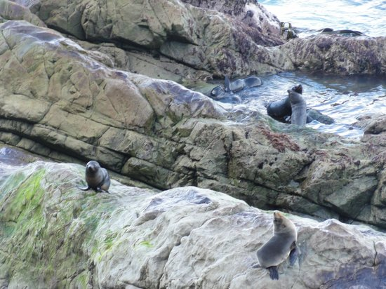 Colonie de phoques : Seals playing at Seal Colony Oha Point