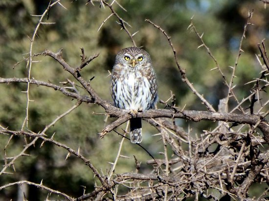 Three Cities Madikwe River Lodge: Owl
