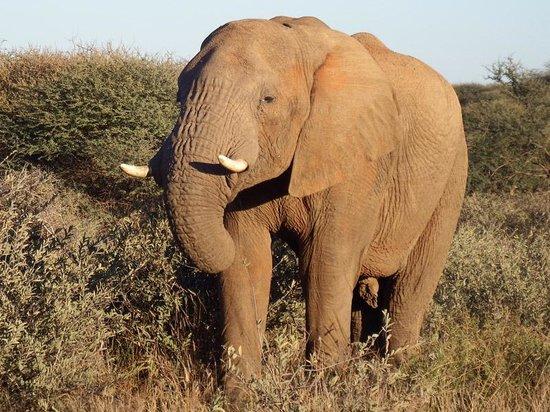 Three Cities Madikwe River Lodge : Elephant