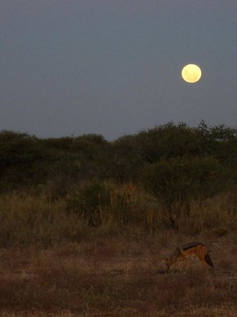 Three Cities Madikwe River Lodge: Hyena at moonrise