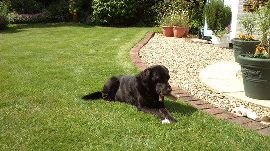 Latchetts Cottage: The greedy dog :-)