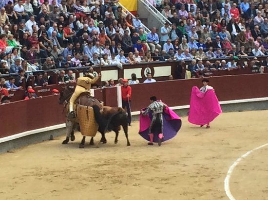 Las Ventas Tour : Bull Attacking the horse