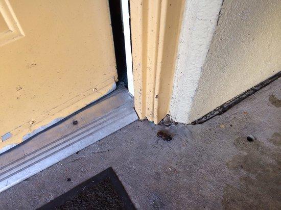 Days Inn Jacksonville Baymeadows: Cockroach