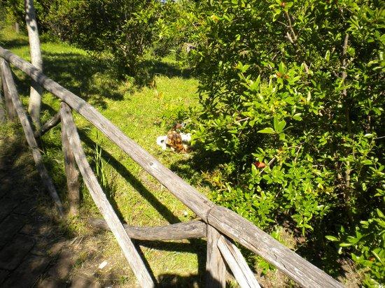 Country House Pro Vobis - Il giardino