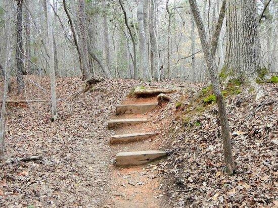 Eno River State Park: blue trail