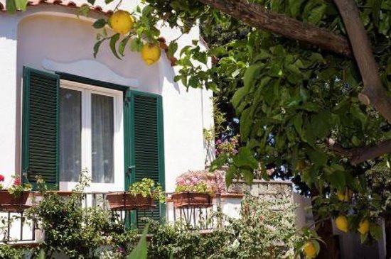 Hotel Villa Melodie: piante limoni