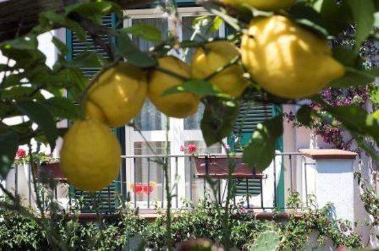 Hotel Villa Melodie: piante di limoni vista dalla camera