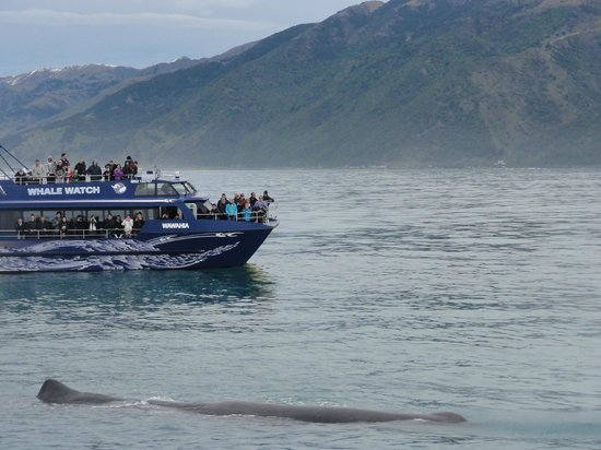 Whale Watch: Whaling story