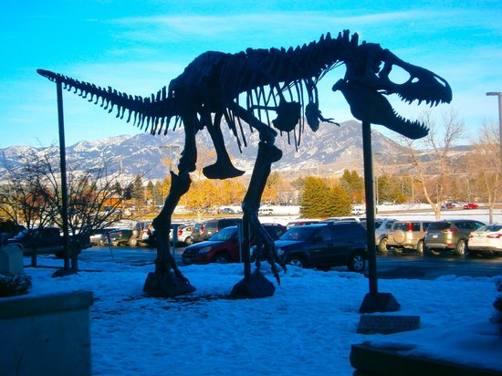 """Big Mike"" greets visitors at the Museum of the Rockies"
