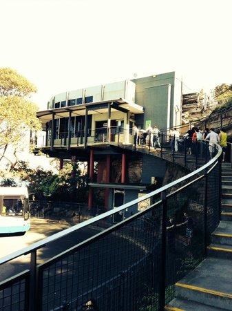 Taronga Zoo: Arriving