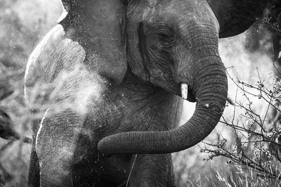 Pondoro Game Lodge: An elephant giving itself a dust bath