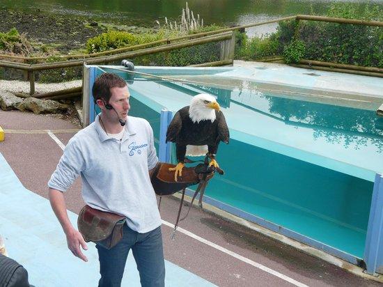L'Aquashow: Stéphane avec un pygargue Dana