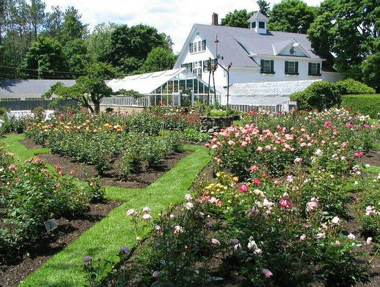 North Hampton, NH: Rose gardens ablaze in vibrant colors!