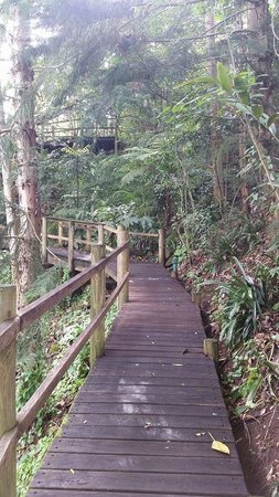 The Falls Montville: rainforest walkway