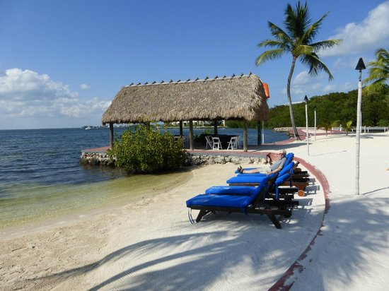 Key Largo Bay Marriott Beach Resort: Sunbeds on beach