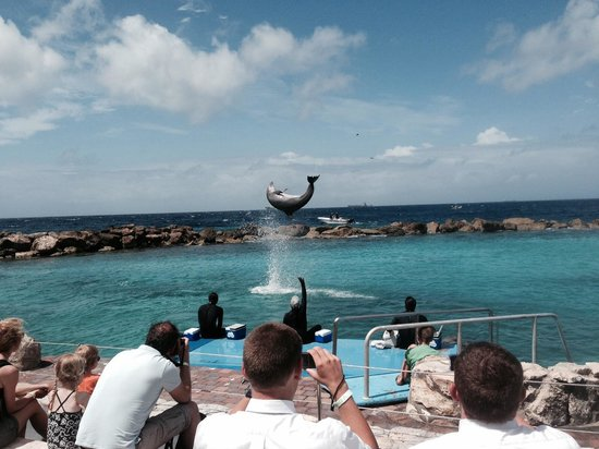 Sunscape Curacao Resort Spa & Casino: Dolphin show