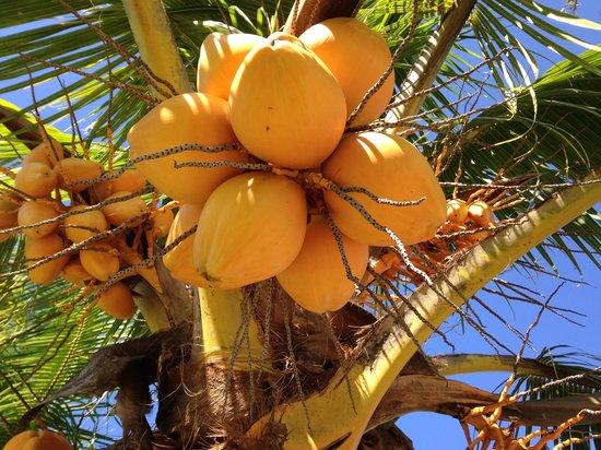 Jalsa Beach Hotel & Spa - Mauritius: In the gardens!