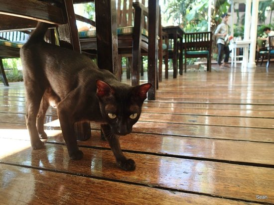 Anantara Hua Hin Resort : Cute cat!