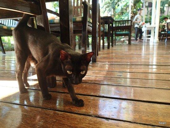 Anantara Hua Hin Resort: Cute cat!
