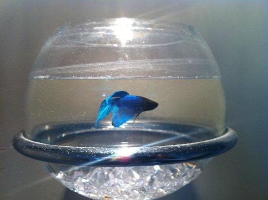 The Pearl Hotel: pesce in stanza, uno per ogni stanza