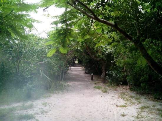 Kipepeo Beach Village : The pathway to the bandas... About 300m from beach.