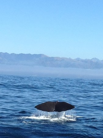 Whale Watch: Whale Starting to fluke