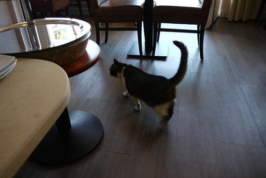 Clemens Hotel: hotel cat