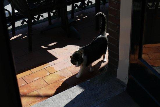 Clemens Hotel: hotel cat