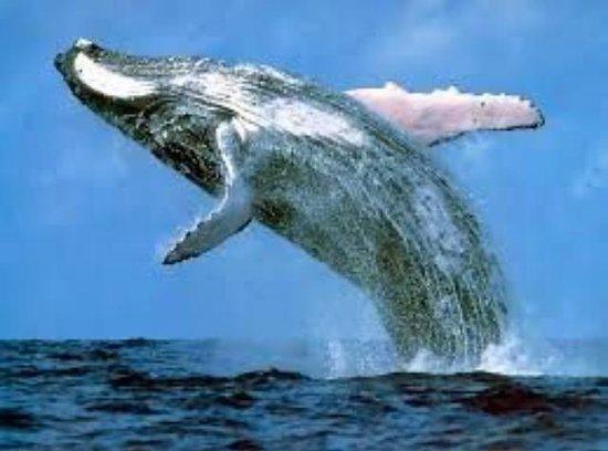 بيركينهيد مانور: Whale watching from our beach from August onwards