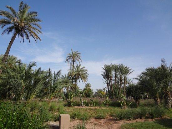 Pullman Marrakech Palmeraie Resort and Spa : Palmeraie