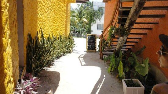 Tribu Hostel: Hostel grounds