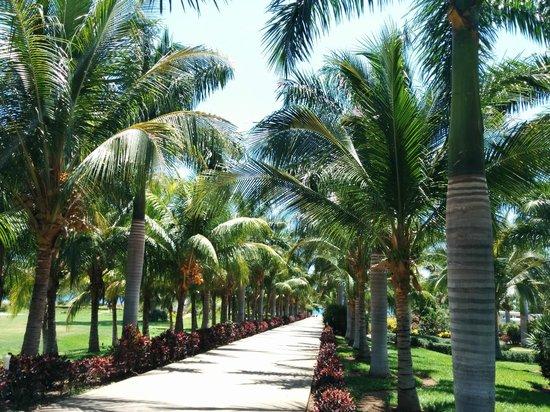 Hotel Riu Guanacaste: Resort
