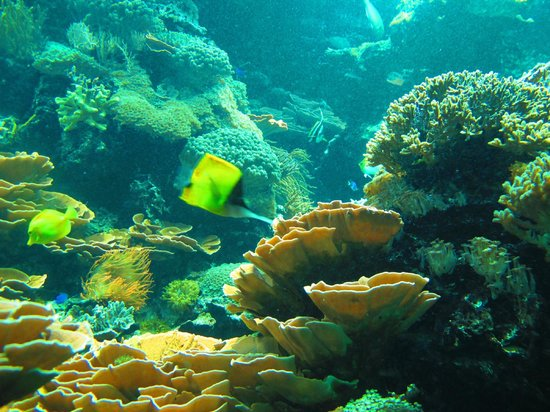Tiergarten Schoenbrunn - Zoo Vienna : aquarium