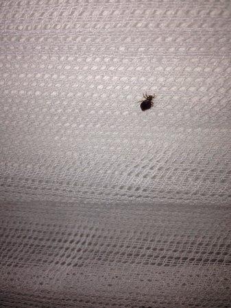 Sensi Paradise : One of many bed bugs