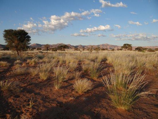 Namib Desert Lodge : Der Ausblick von der Veranda