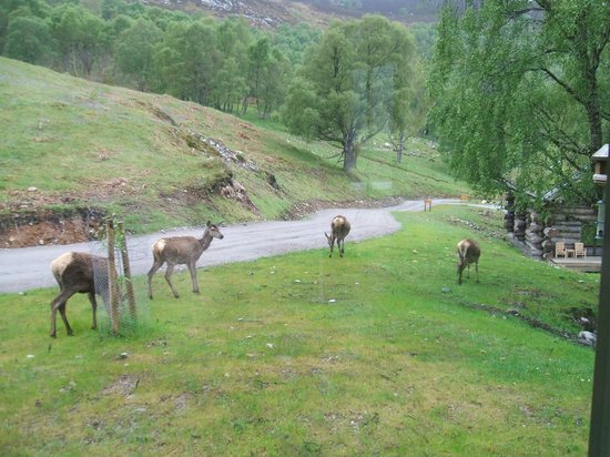 Eagle Brae: Deers right outside the cabin.