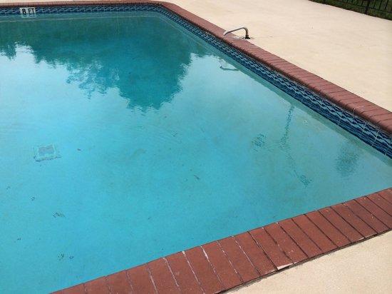 Quality Inn : Slime inside the pool. Very gross.