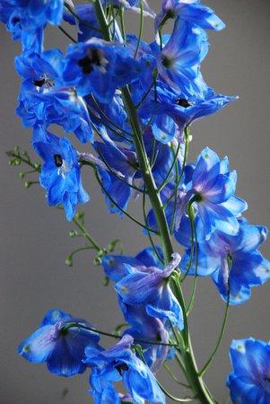 Maison Rika: fiori sempre freschi