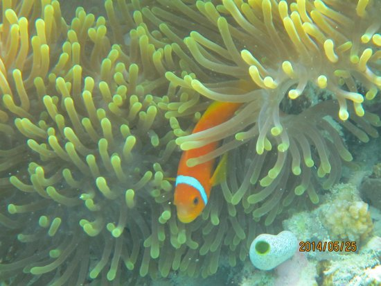 Lily Beach Resort & Spa : fish