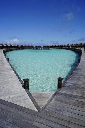 Lily Beach Resort & Spa : DX WATER VILLA