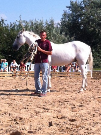 Her'equestre : Spectacle