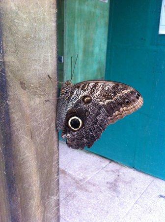 L'Ile aux Papillons : Papillon