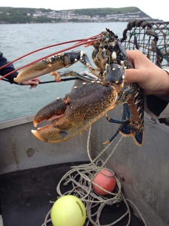 SeaMor Dolphin Watching Boat Trips : lobster!