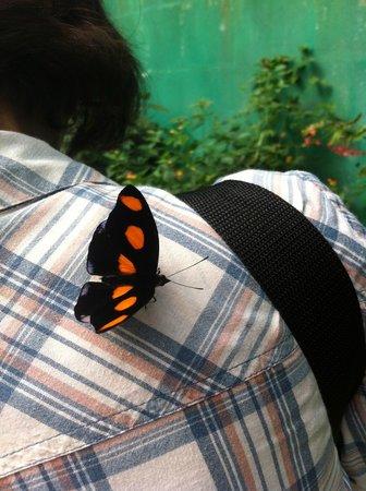 L'Ile aux Papillons : Ils viennent parfois se poser mais interdit d'y toucher