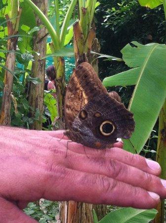 L'Ile aux Papillons : Pas farouche