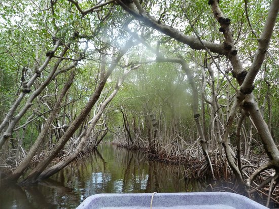 Totch's Everglades Island Airboat Tours : en los everglades