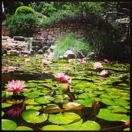 Zilker Botanical Garden: Lily pond in the Japanese Garden.