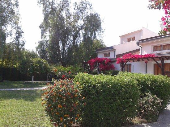 Citrus Tree Gardens : The very comfortable mini villa's
